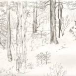 Winter Forest, graphite on paper, 2014